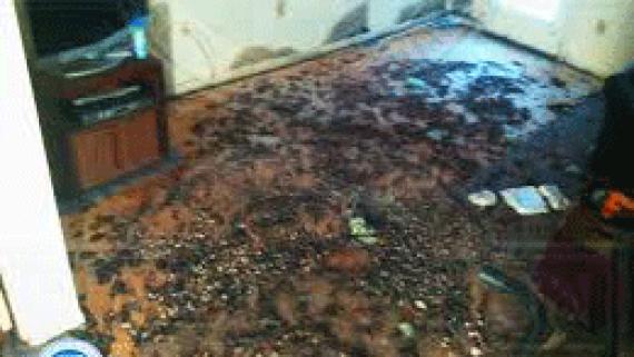 Sewage Leak Cleaners Brisbane QLD