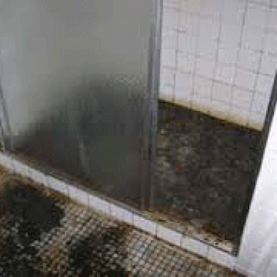 Sewage Leak Cleaners